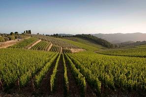 Dematerializzazione registro vini